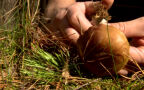 Kupowanie grzybów przy drodze? Grzyboznawca przestrzega [materiał z 2016 roku]