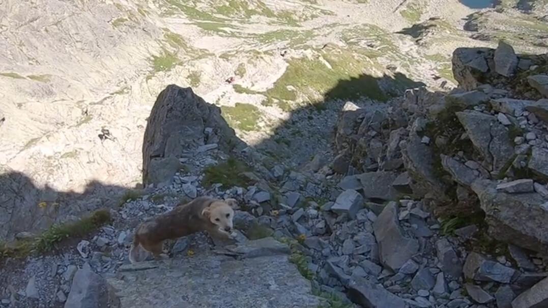Pies błąkał się po Tatrach w niebezpiecznym terenie