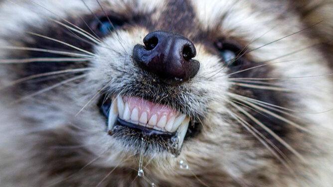 """Obnażały zęby, z pyska ciekła ślina. """"Zombie apokalipsa"""" w Ohio"""