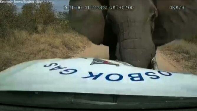 Uderzył w samochód i rozpruł maskę. Szarżujący słoń na nagraniu
