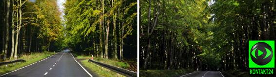 Jesień nieśmiała w wejherowskim lesie