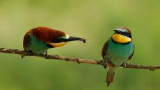 Jeden z najbardziej kolorowych ptaków - żołna